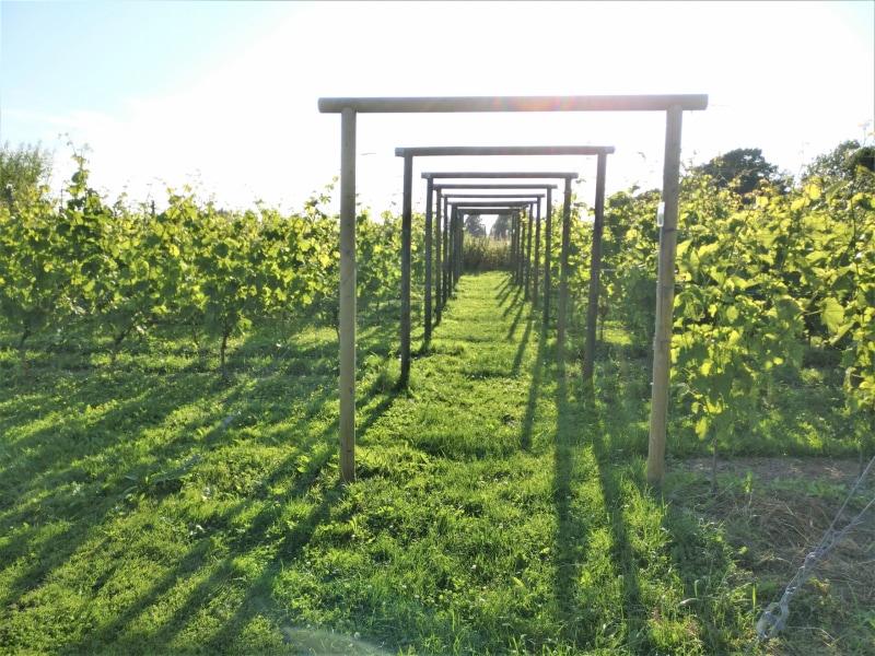 Frillestads vingård