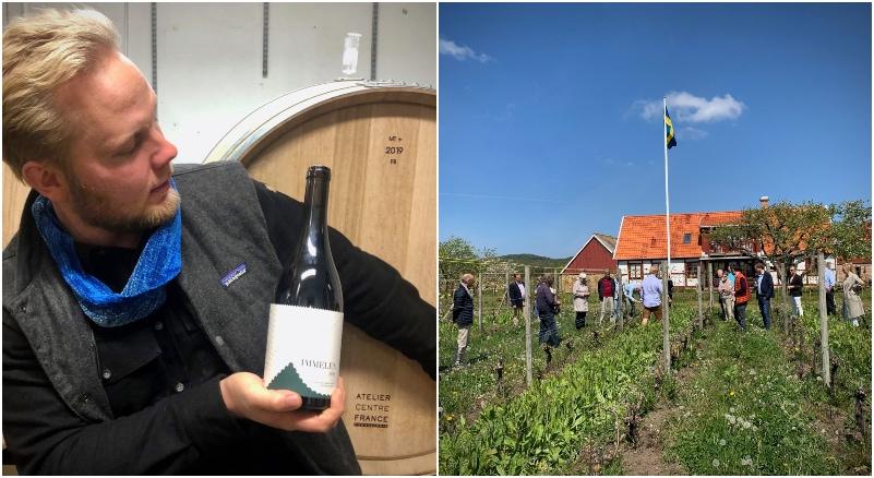 Kullabergs vingård i Skåne