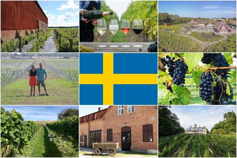 Vingårdar i Sverige