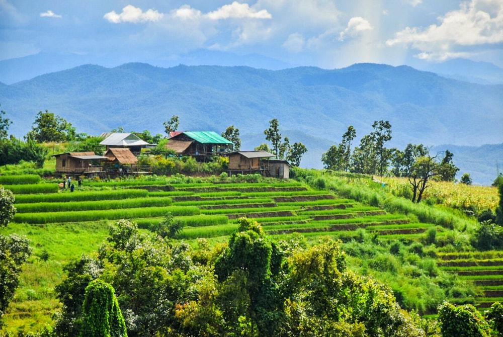 grönskande risterrasser vid Pa Bong Piang