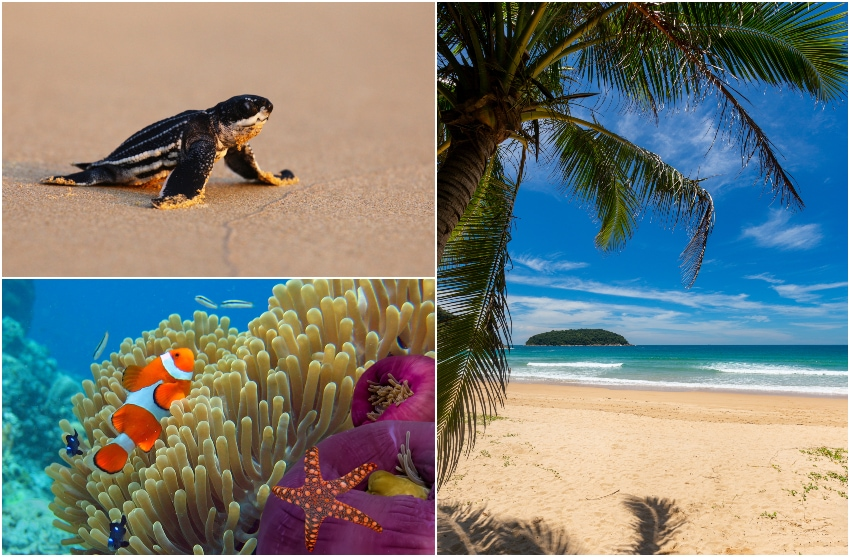 Thailands natur återhämtar sig