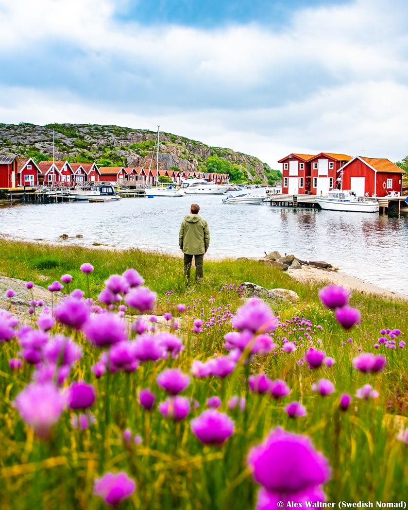 sjöbodarna i skuthamn med blommor i förgrunden